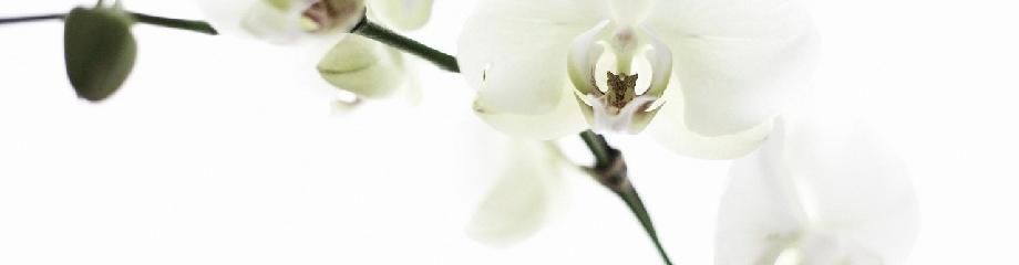 www.peruanosenelexterior.com